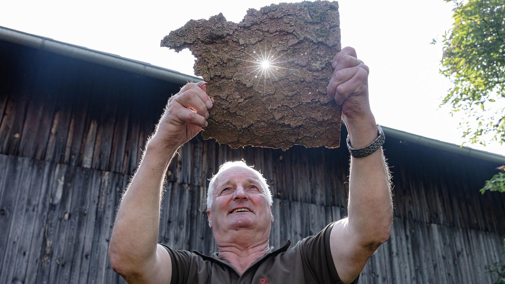 Ein Forstarbeiter zeigt die Schäden durch den Borkenkäfer.